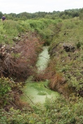 3. Drainage channel: Today deep drainage channels criss-cross the bog and extract the water from the peat, causing it to shrink and oxidise so releasing carbon dioxide back to the atmosphere.