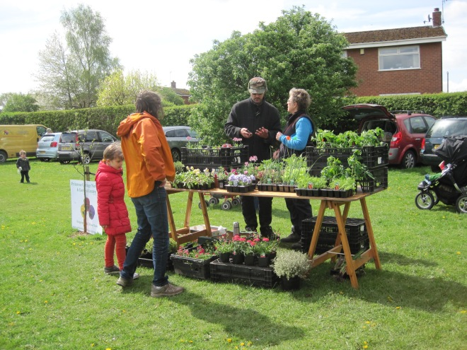 Plant Stall 2014