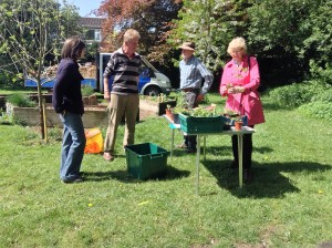 SWAPPING SEEDLINGS