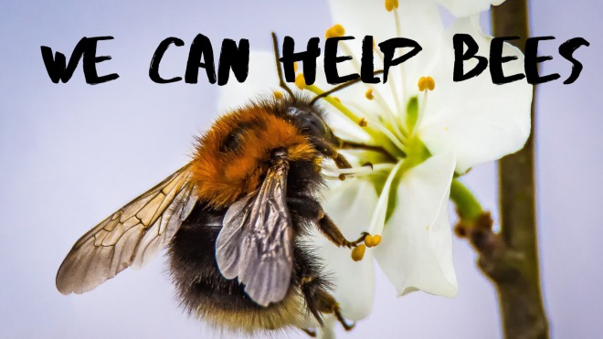 We can help bees image